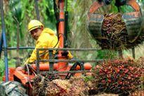 Indonesia phủ nhận thông tin 'đóng băng' đàm phán CEPA với EU