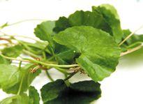 Tác dụng phụ kinh hoàng của rau má ai cũng phải biết