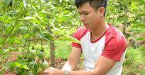 'Cặp đôi hoàn hảo' chán lương kỹ sư 13 triệu về trồng chanh dây