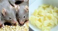 Đây chính là cách đuổi chuột nhanh mà hiệu quả nhất chẳng cần tới thuốc diệt