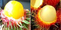 Quả chôm chôm ruột vàng như lòng đỏ trứng gà