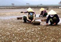 Thanh Hóa: Chủ tịch tỉnh phê bình chủ tịch huyện vụ ngao chết