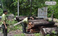 Gian nan cuộc chiến giữ rừng:Rừng Yok Đôn không bình yên