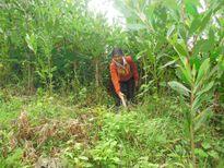 Đồng bào dân tộc thiểu số rất ít người sẽ được hỗ trợ đất sản xuất, trồng rừng