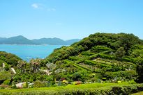 Đảo Geoje - Điểm du lịch mới tại Hàn Quốc cho du khách Việt Nam