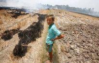 550.000 ha đất ĐBSCL bị ảnh hưởng hạn hán