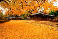 Khám phá mùa thu lãng mạn trên khắp thế giới