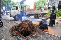 Cây xanh lại bật gốc trên phố trung tâm Sài Gòn