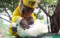 Hi hữu tình bạn khác loài mà thắm thiết của động vật