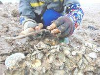 Nước rút sau bão người dân đổ xô đi đẽo hàu đá