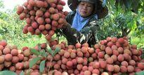 Hải Dương: Tái cơ cấu ngành nông nghiệp theo hướng phát triển bền vững