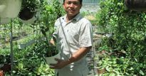 Chàng 'chuyên gia' hạt giống và niềm đam mê trồng hoa giỏ