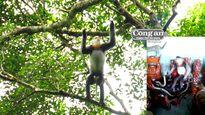 Vườn Quốc gia Kon Ka Kinh đối mặt nhiều nguy cơ bị xâm hạiBài 2: Những tiếng voọc lạc bầy