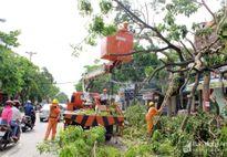 Nhanh chóng khắc phục hậu quả sau bão, hỗ trợ phát triển sản xuất