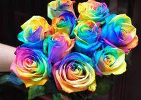 Phát sốt hoa hồng 7 sắc cầu vồng đắt đỏ siêu 'hot'