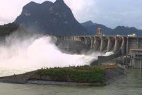 Hàng trăm tấn cá lồng ở sông Đà chết do thủy điện xả lũ