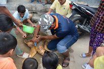 Cứu hộ rùa biển 70kg lạc vào Nhà máy Nhiệt điện Vĩnh Tân 2