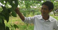 Làm nhà lưới 'nhốt' rau sạch, nhà nông có thu nhập cả chục triệu/tháng