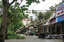 Nghệ An đề nghị Trung ương hỗ trợ 260 tỷ đồng khắc phục thiệt hại do bão