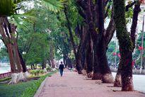 Tỷ lệ diện tích cây xanh Hà Nội chỉ đạt 1/10 tiêu chuẩn thế giới!