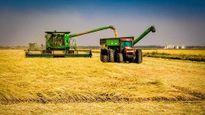 Sự thật đằng sau việc Trung Quốc nhập khẩu gạo Mỹ