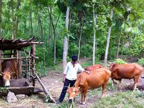 Tái cơ cấu nông nghiệp: Chuyển động từ hoạt động khuyến nông