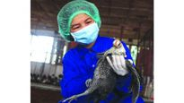 Áp dụng tiến bộ kỹ thuật vào chăn nuôi