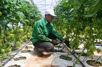 45 tỷ đồng xây dựng chuỗi sản xuất nông nghiệp bền vững Lâm Đồng