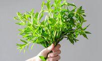 Sự thật thú vị về cây rau ngổ quen thuộc