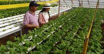 Bỏ làm giám đốc về trồng rau-quyết định 'khùng' cho thu nhập 'khủng'