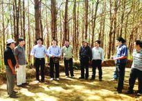Xanh lại đất rừng Kon Tum