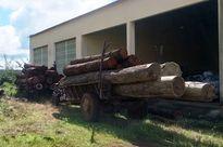 Bắt vụ vận chuyển trái phép 8m3 gỗ xoan đào