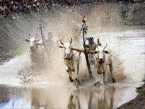 Miền Tây đẹp bình dị trong ảnh 'Dấu ấn Việt Nam'
