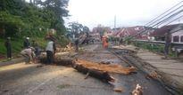 Bị cây đổ trúng người, 2 mẹ con chết thương tâm