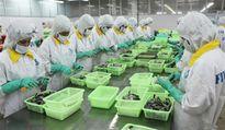 Thị trường xuất khẩu tôm sẽ bùng nổ