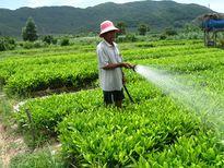 Bình Định quản lý chặt chất lượng cây giống lâm nghiệp