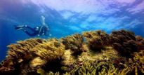 Vụ nhận chìm 1 triệu m3 bùn thải: Đề xuất giải pháp mới
