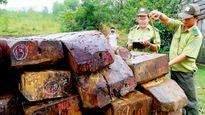 Tăng cường quản lý, bảo vệ, phát triển rừng