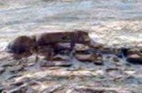 Phát hiện xác người ngoài hành tinh nằm chết sấp mặt trên sao Hỏa?