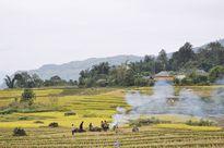 Bát Xát (Lào Cai) sẵn sàng cho Lễ hội mùa thu