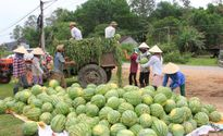 Tự phát mở rộng diện tích cây trồng ngoài quy hoạch: Tiềm ẩn nhiều rủi ro