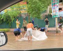 Clip: Dân đổ xô ra đường, giăng màn bắt cá sau mưa lớn