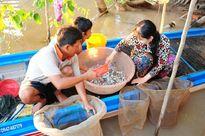 Chợ cá đồng mùa lũ ở đồng bằng sông Cửu Long