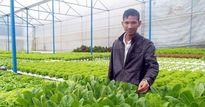 Cử nhân toán học biến 1,5 sào đất thành vườn rau thủy canh tiền tỷ