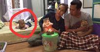 Cười nghiêng ngả trước cảnh bố mẹ tổ chức sinh nhật cho mèo, 'bơ' cả con đẻ