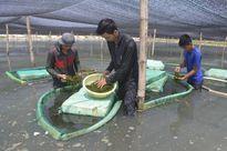Cần có giải pháp phát triển bền vững nghề nuôi trồng rong biển