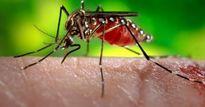 Thanh Hóa: Phát hiện ổ dịch sốt xuất huyết đầu tiên tại Tĩnh Gia