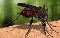 Không ưa thuốc xịt muỗi, chỉ cần trồng 2 loại cây này