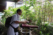 Bộ trưởng Bộ Y tế hy vọng trong tuần này Hà Nội sẽ khống chế được dịch sốt xuất huyết