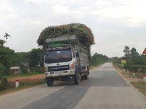 Nghệ An: Xe quá tải ' tung hoành' trên đường mòn Hồ Chí Minh